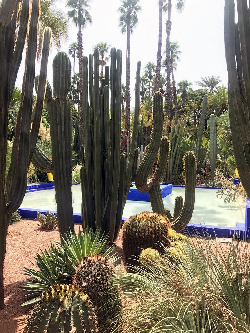 Villa Majorelle à Marrakech - Avril sur un fil