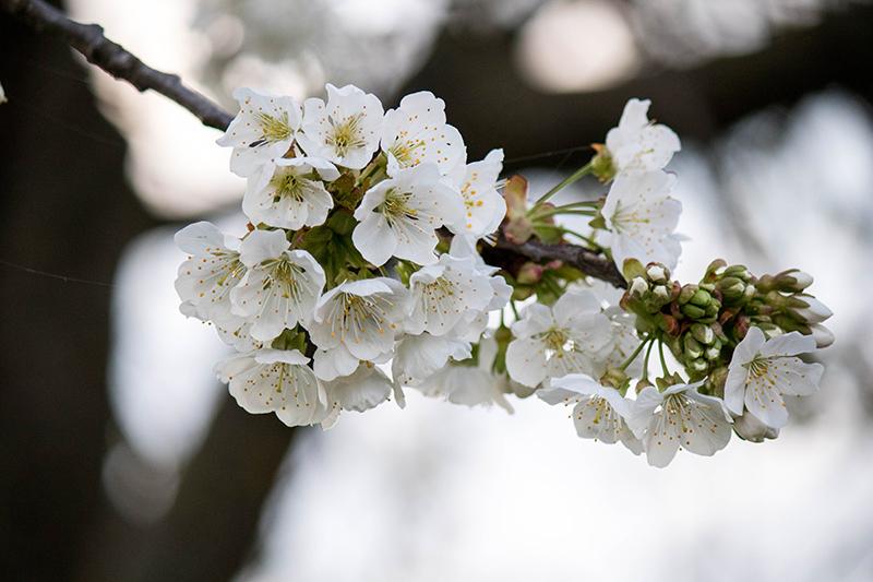 Un dimanche sur un fil #6 - Avril sur un fil